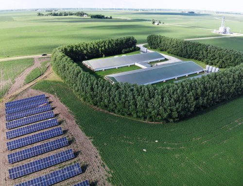 How Many Solar Panels Should You Install on Your Hog Farm?