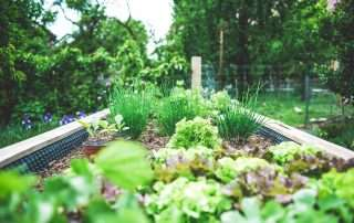vegetable garden in a back yard
